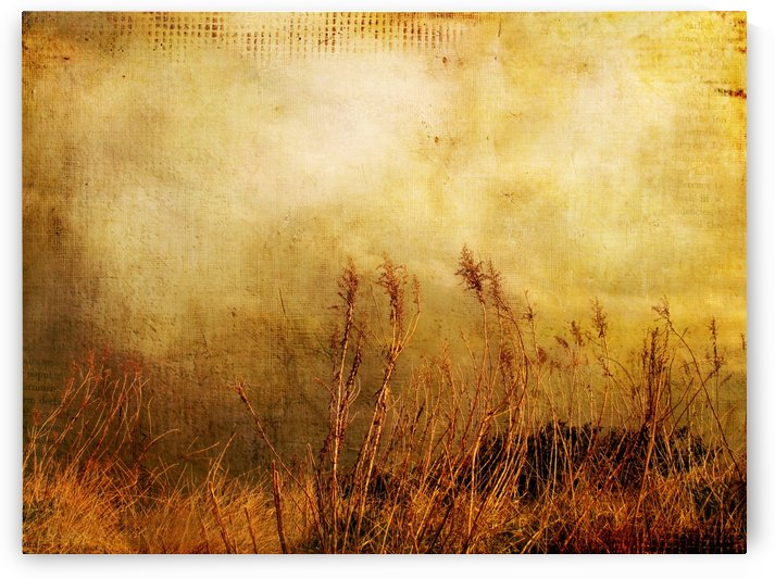 Beach Grasses of Gold by Susan Werby