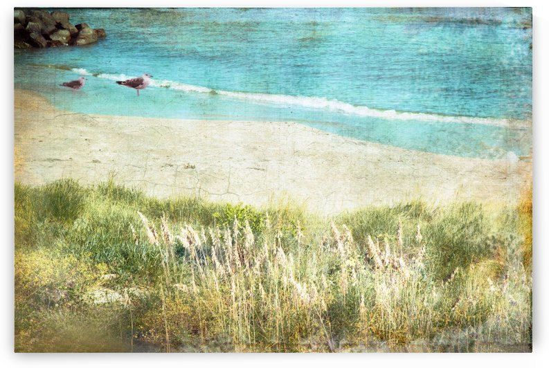 Colours by the Sea  by Susan Werby