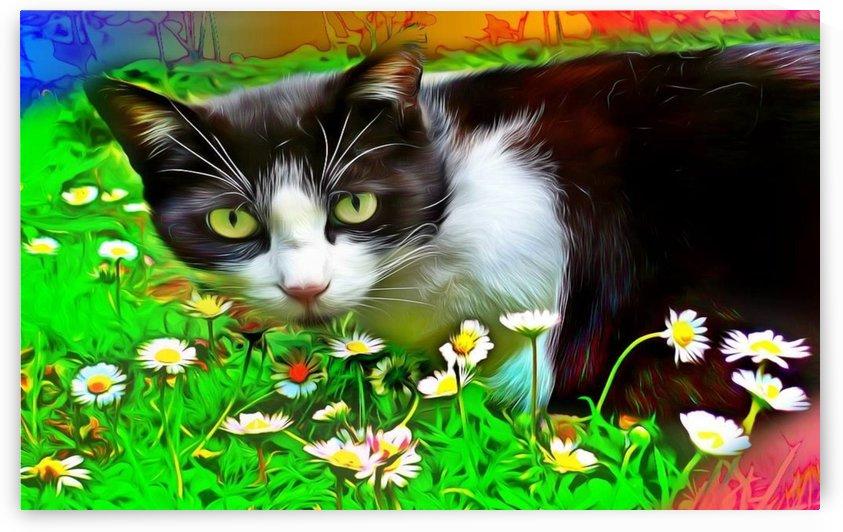 Catnip Overdose by Chazzi R  Davis
