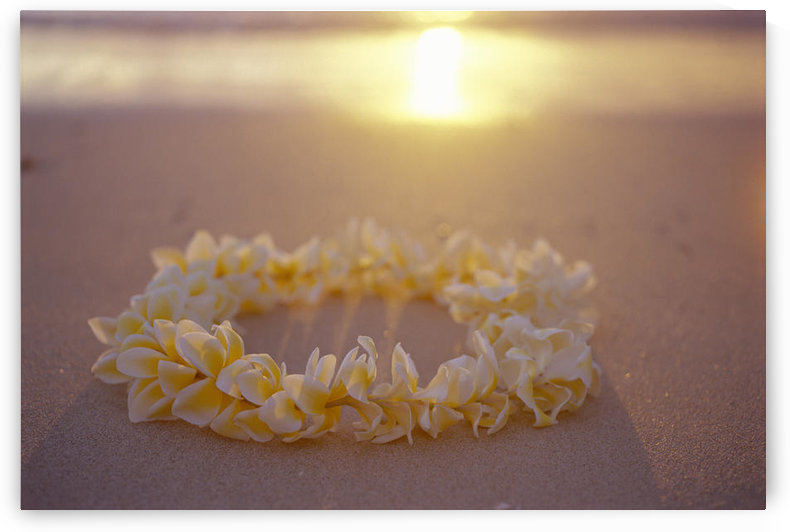 Yellow Plumeria Lei Shoreline Beach With Shadow Golden Reflections Ocean Sunset by PacificStock