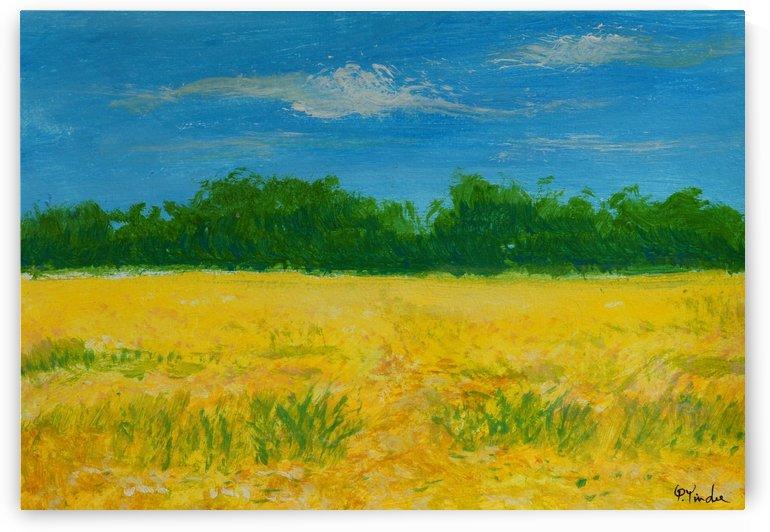 Yellow Fields by Pracha Yindee