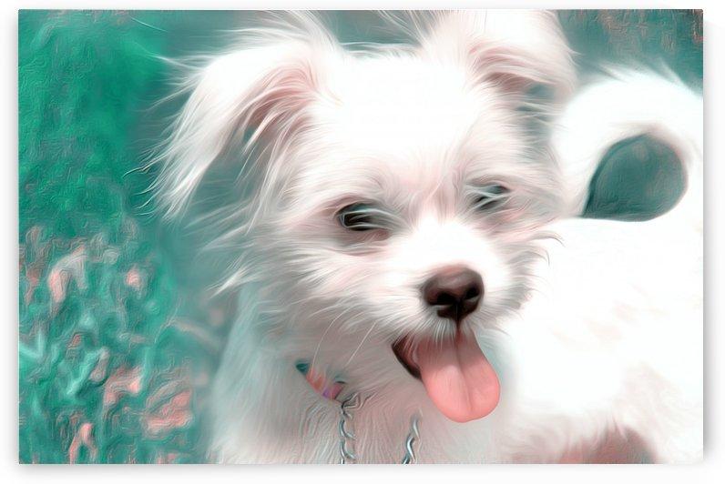 WHITEdog by Chazzi R  Davis