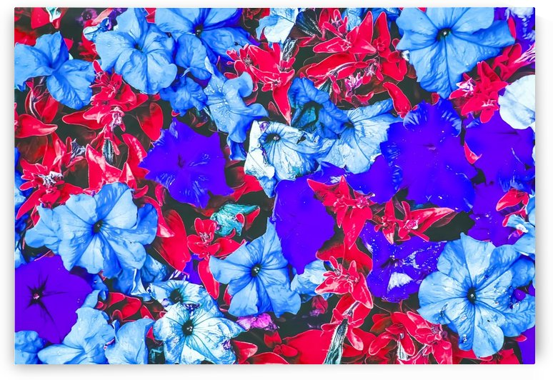 closeup flower texture abstract in blue purple red by TimmyLA