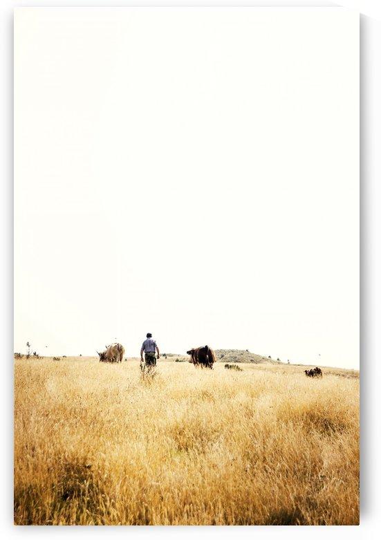 Cow man by Marko Radovanovic