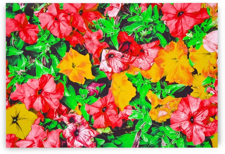 closeup flower abstract background in pink red yellow with green leaves by TimmyLA