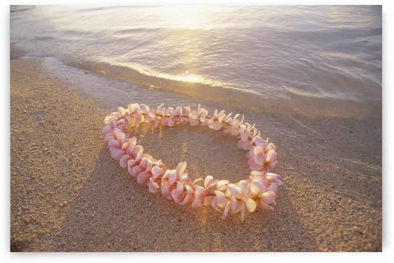 Pale Pink Plumeria Lei In Shoreline Waters With Golden Sunset Reflections by PacificStock