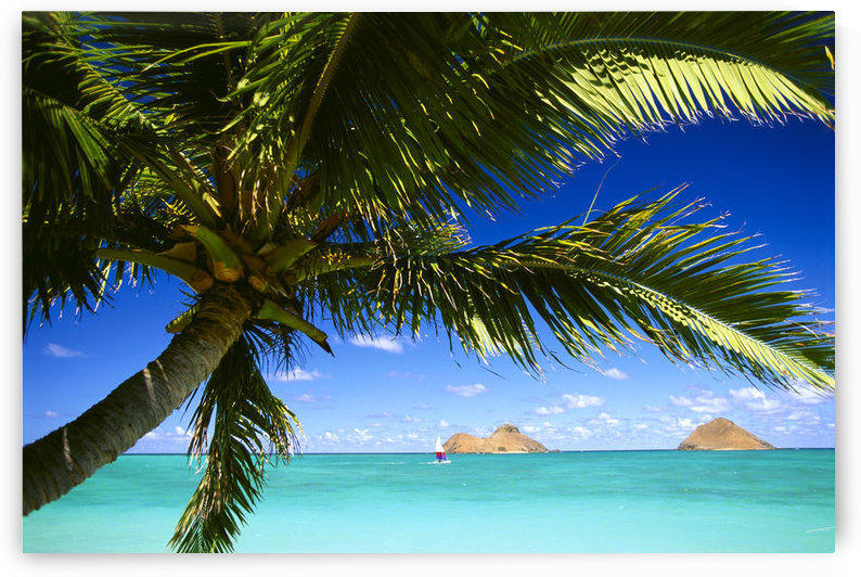 Hawaii, Oahu, Lanikai, Palm Tree Foreground, With Mokulua Islands Background, Sailboat In Turquoise Waters. by PacificStock