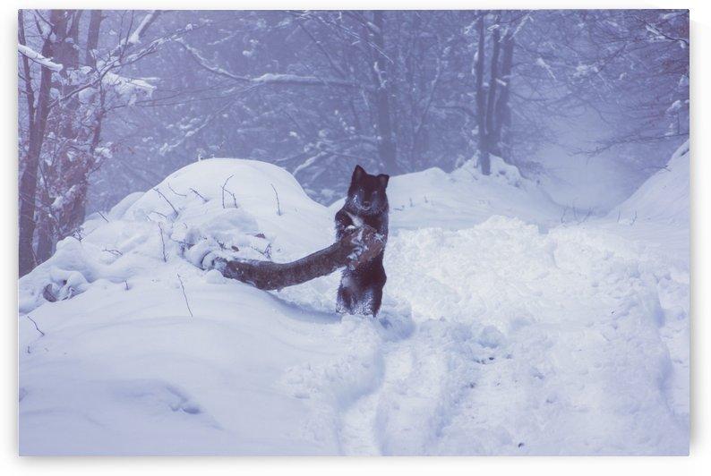 Lumberdog  by Marko Radovanovic