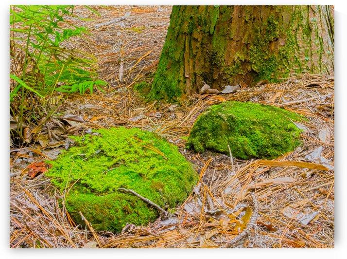 HDR Rocks fern tree trunk by PJ Lalli