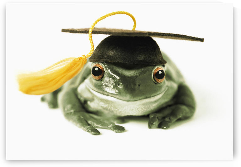 Fv3541, Natural Moments Photography; Frog In Graduation Cap by PacificStock