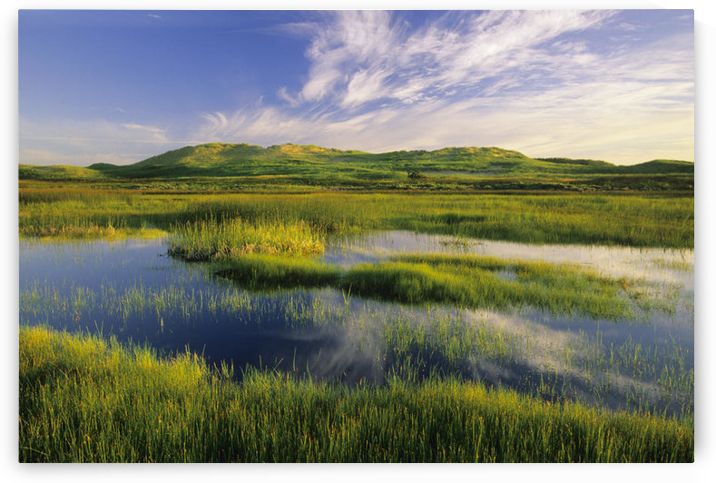Dune Pond, Brackley, Prince Edward Island National Park by PacificStock