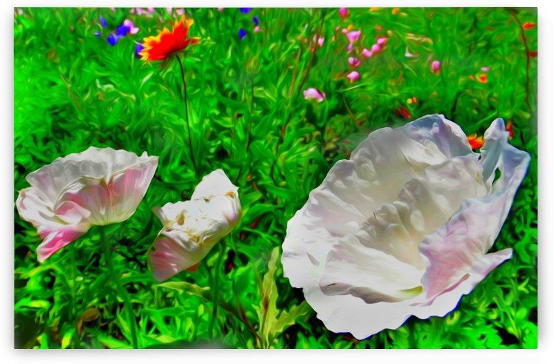whiteflower by Chazzi R  Davis