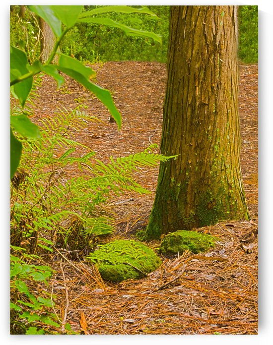 HDR Rocks tree and fern vertical by PJ Lalli