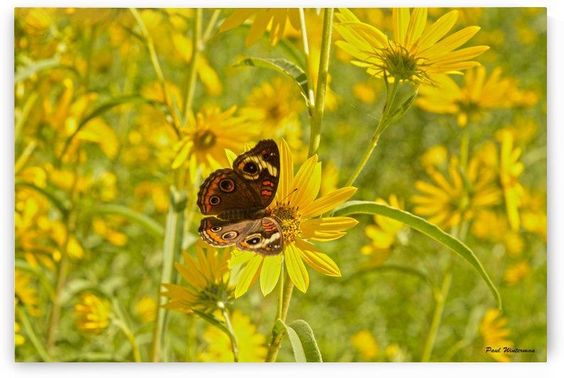 Yellow Hues by Paul Winterman