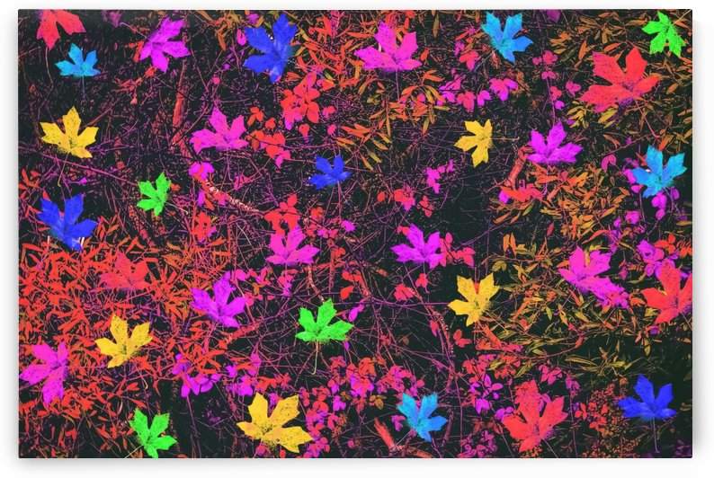 maple leaf in yellow green pink blue red with red and orange creepers plants background by TimmyLA