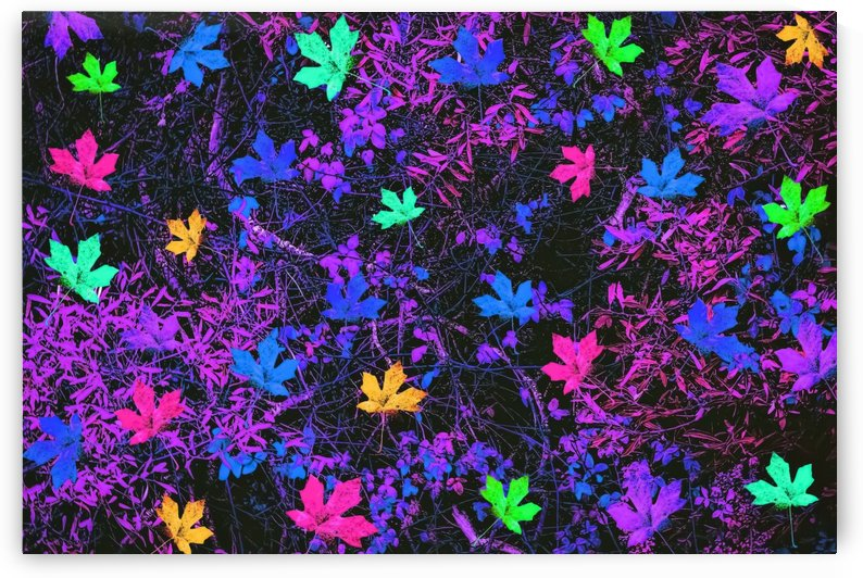 maple leaf in pink blue green yellow purple with pink and purple creepers plants background by TimmyLA