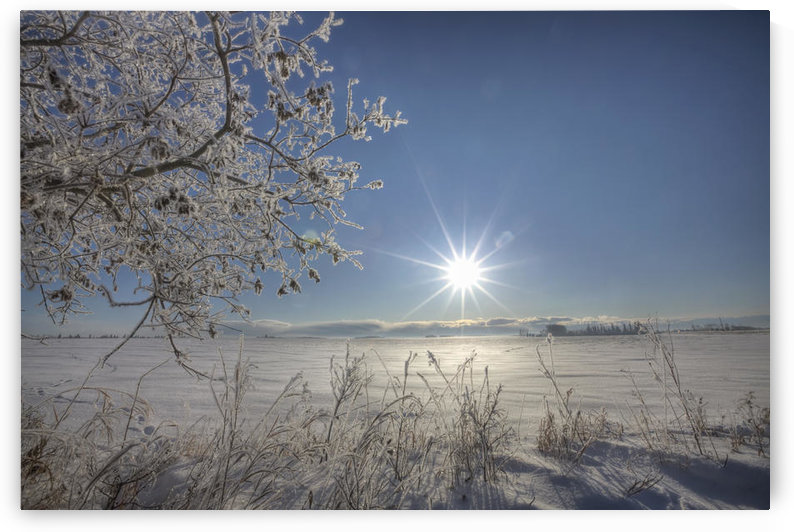 Frost Covered Trees On Winter Morning, Alberta by PacificStock