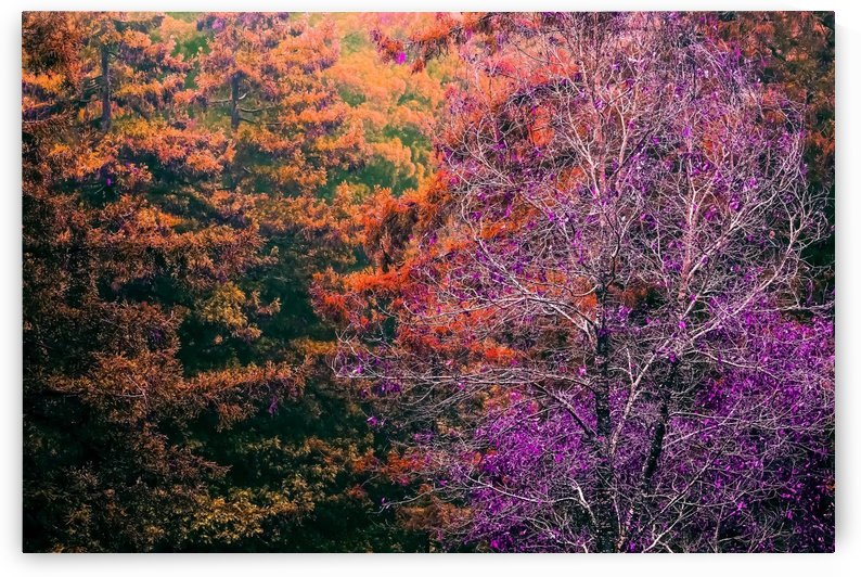autumn tree in the forest with purple and brown leaf by TimmyLA