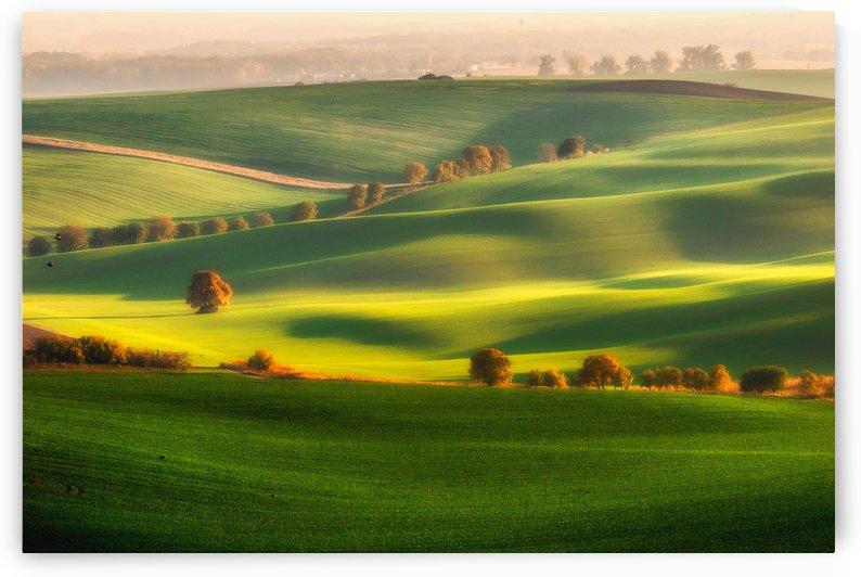 Green fields by 1x
