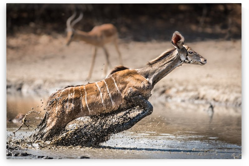 Kudu jump by 1x