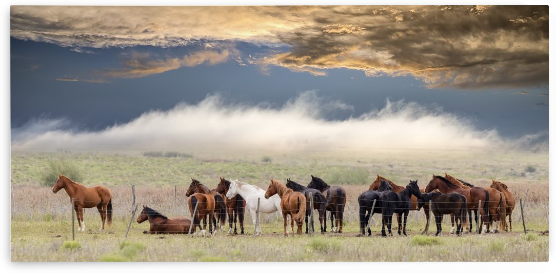 Horses by 1x