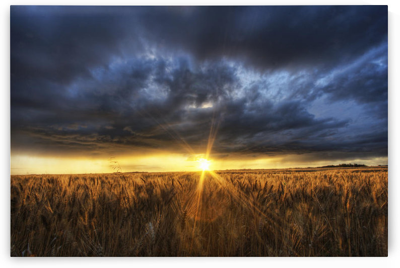 Autumn Sunset Over A Barley Field On A Farm North Of Edmonton, Alberta. by PacificStock