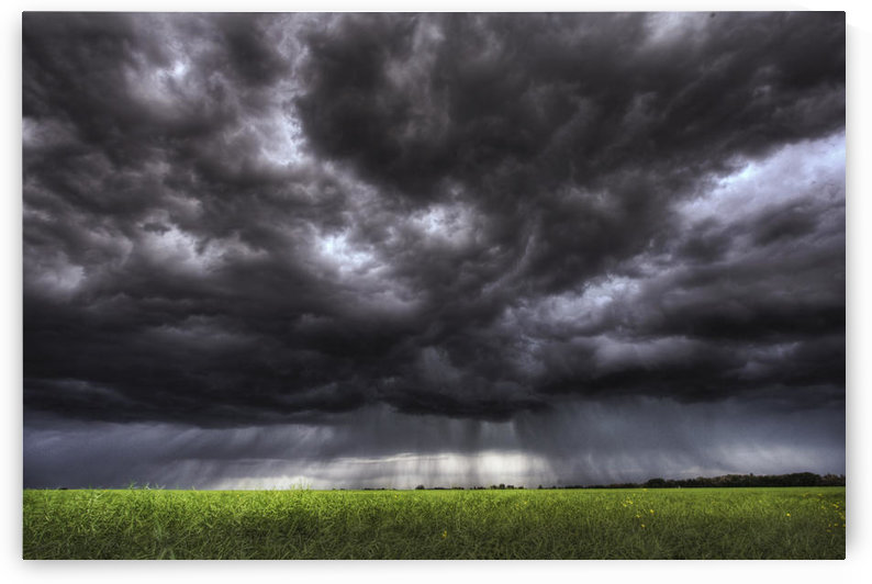 Summer Storm Clouds Over An Unripened Canola Field North Of Edmonton, Alberta. by PacificStock