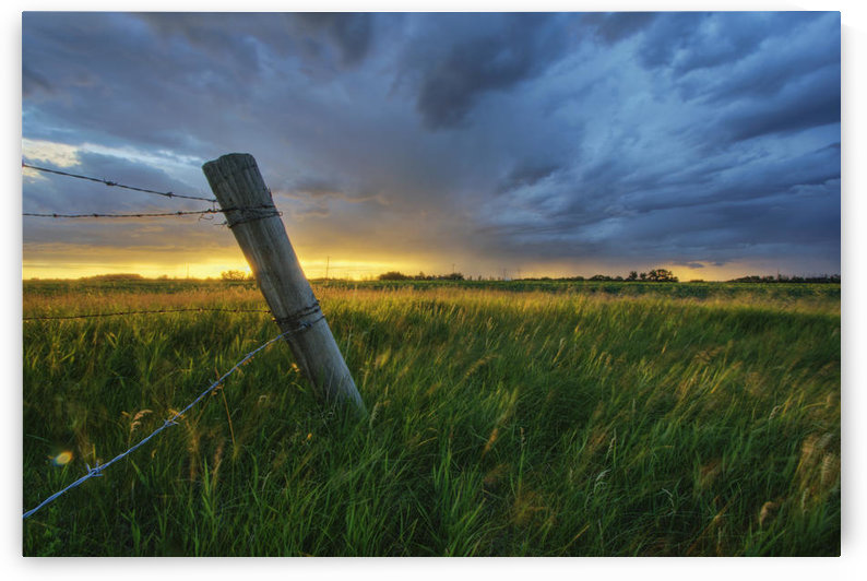 Summer Thunderstorm And Fencepost On A Wheat Farm North Of Edmonton, Alberta. by PacificStock