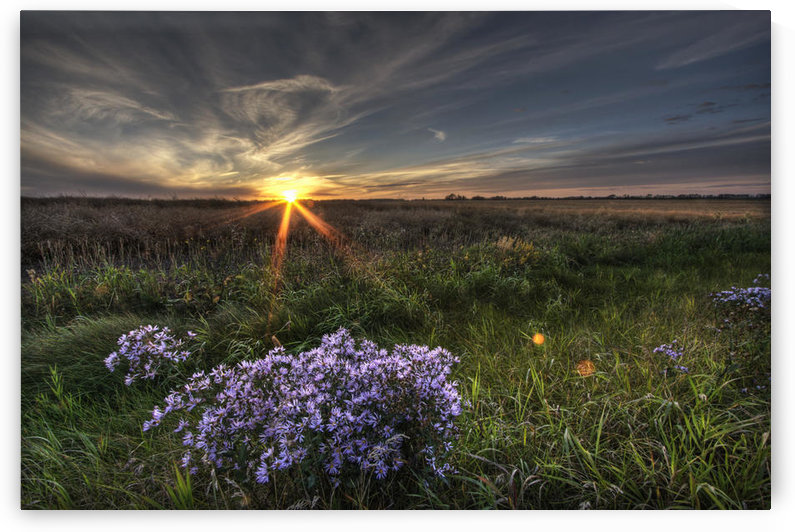 Summer Sunset Over Prairie Wildflowers North Of Bon Accord, Alberta. by PacificStock