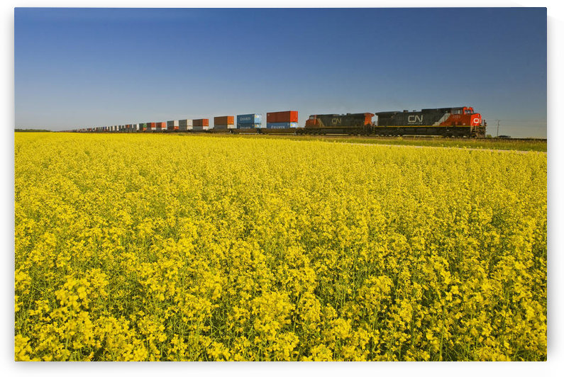 Rail Cars Carrying Containers Passe A Canola Field, Near Winnipeg, Manitoba, Canada by PacificStock