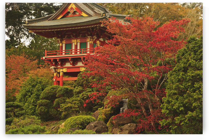 Japanese Tea Garden In Golden Gate Park; San Francisco California United States Of America by PacificStock