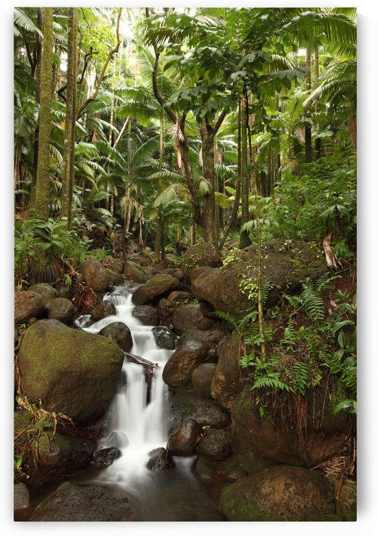 Stream Running Through The Rainforest Near Hilo, Big Island, Hawaii by PacificStock
