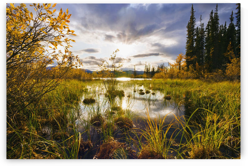 Yukon River And Fall Colours At Sunset, Yukon by PacificStock