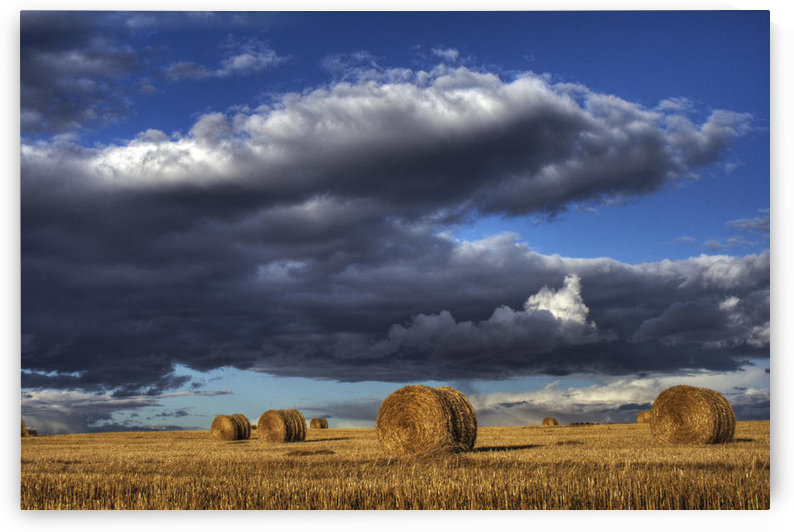 Hay Bales Under Cumulus Clouds In Autumn, Rural Alberta by PacificStock