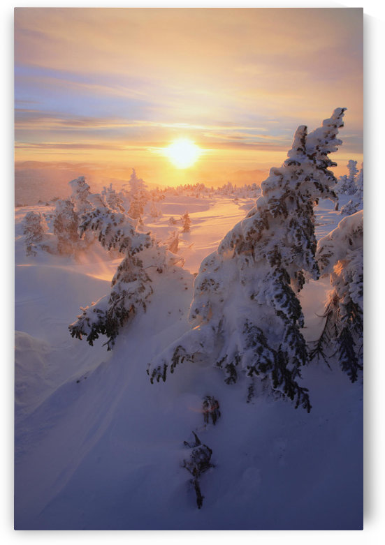 View Of Snow-Covered Trees At Mont Logan At Sunrise, Quebec, Canada by PacificStock