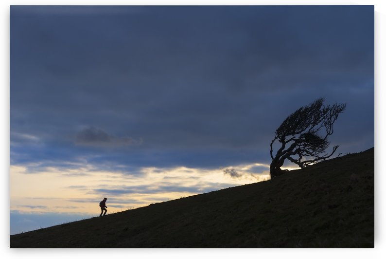 Silhouette of woman walking uphill past gnarled tree near Golden Cap on the Jurassic Coast; Seatown, Dorset, England by PacificStock