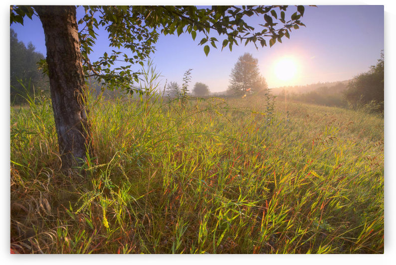 Sunrise On A Dew Covered Grassy Hill, North Of Edmonton, Alberta by PacificStock