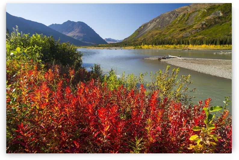 Colourful foliage changing from summer to autumn, South of Denali National Park and Preserve, viewed from Parks Highway, interior Alaska; Alaska, United States of America by PacificStock