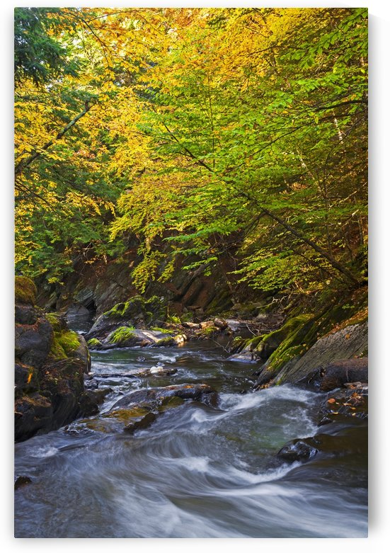 Water flowing in a stream and trees changing colours in autumn; Foster, Quebec, Canada by PacificStock