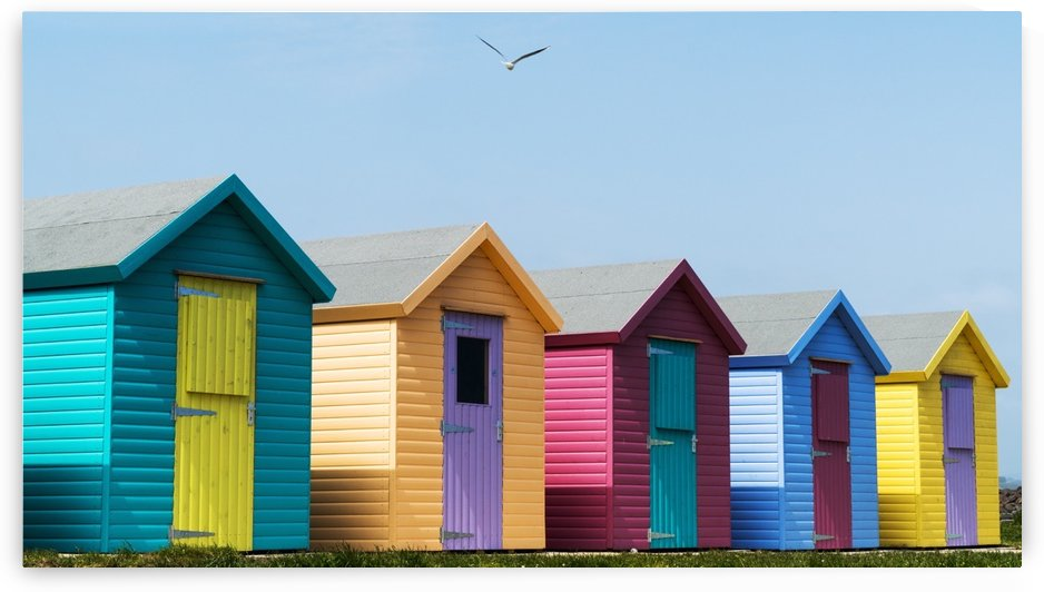Colourful buildings in a row with boarded up windows on the door; Amble, Northumberland, England by PacificStock