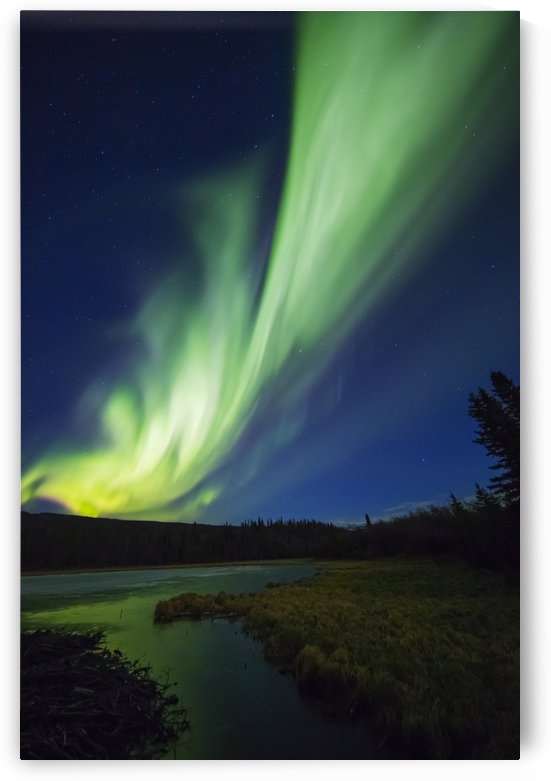 A bright band of aurora borealis stretches across the sky over a frozen beaver pond; Alaska, United States of America by PacificStock