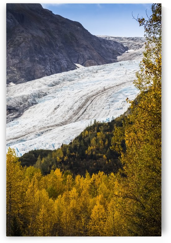 Exit Glacier surrounded by autumn coloured foliage, South-central Alaska near Seward; Alaska, United States of America by PacificStock