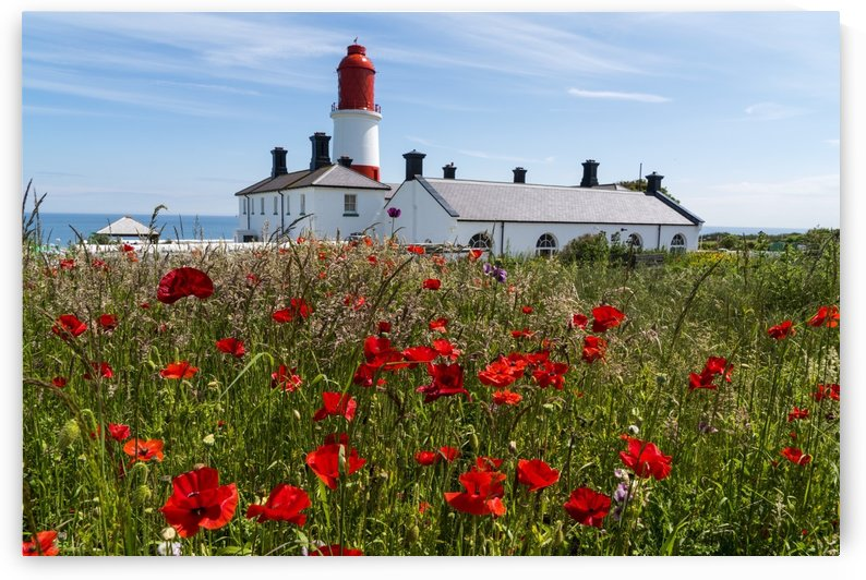 Souter Lighthouse with a field of red poppies in the foreground; South Shields, Tyne and Wear, England by PacificStock
