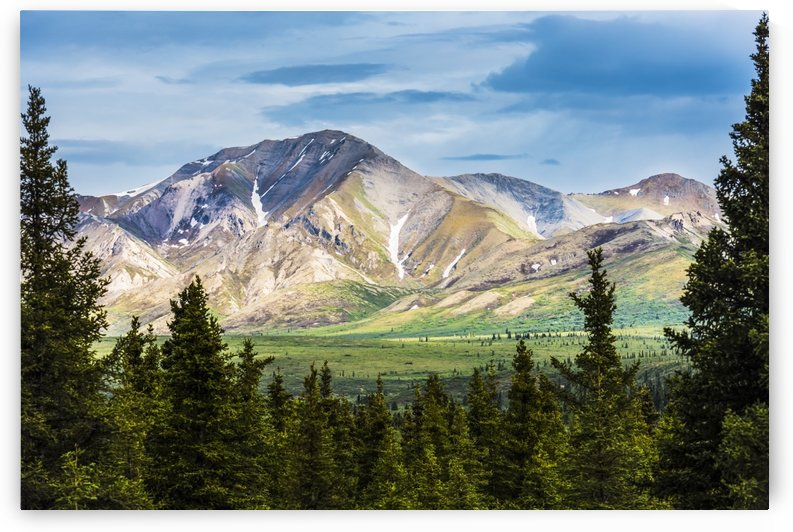 A scenic view of the Alaska Range in Denali National Park near the Savage River on a summer day in South-central Alaska; Alaska, United States of America by PacificStock