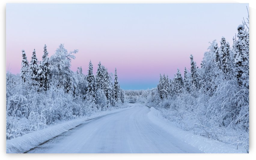 Belt of Venus and hoarfrost at sunrise along a back road in South-central Alaska in winter; Alaska, United States of America by PacificStock