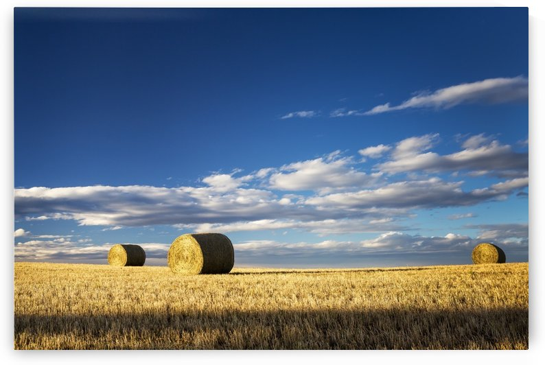 Hay bales in a clear cut field highlighted by the sun with dramatic clouds and blue sky; Alberta, Canada by PacificStock