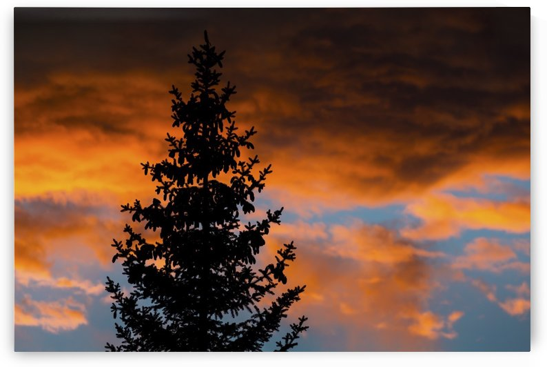 Silhouette of evergreen trees against dramatic colourful clouds at sunset; Calgary, Alberta, Canada by PacificStock