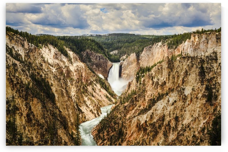Grand Canyon and Lower Yellowstone Falls, Yellowstone National Park; Wyoming, United States of America by PacificStock