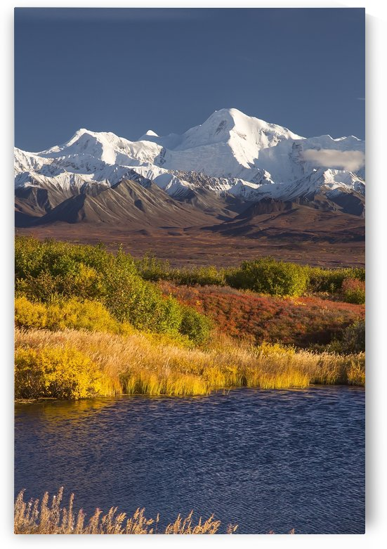 Denali National Park Road on a beautiful day in autumn with the foliage in autumn colours and the rugged, snow-covered mountain peaks, Denali National Park; Alaska, United States of Ameica by PacificStock
