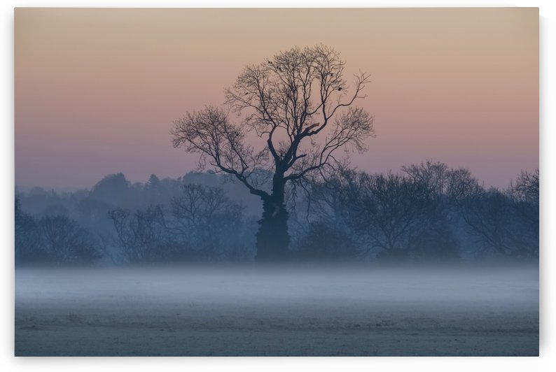 Leafless trees in the mist at sunrise; Surrey, England by PacificStock